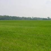 edil sasso marconi terreni affitto vendita